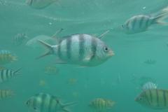 Fische soweit das Auge reicht