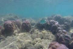 Unterwasserimpressionen