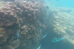 Unterwasserimpressionen3
