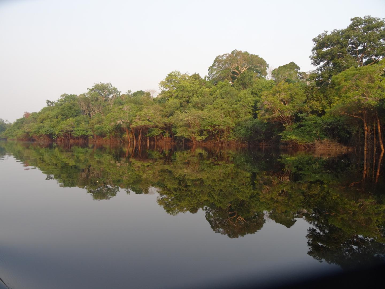 Der Amazonas Regenwald in seiner schönsten Pracht