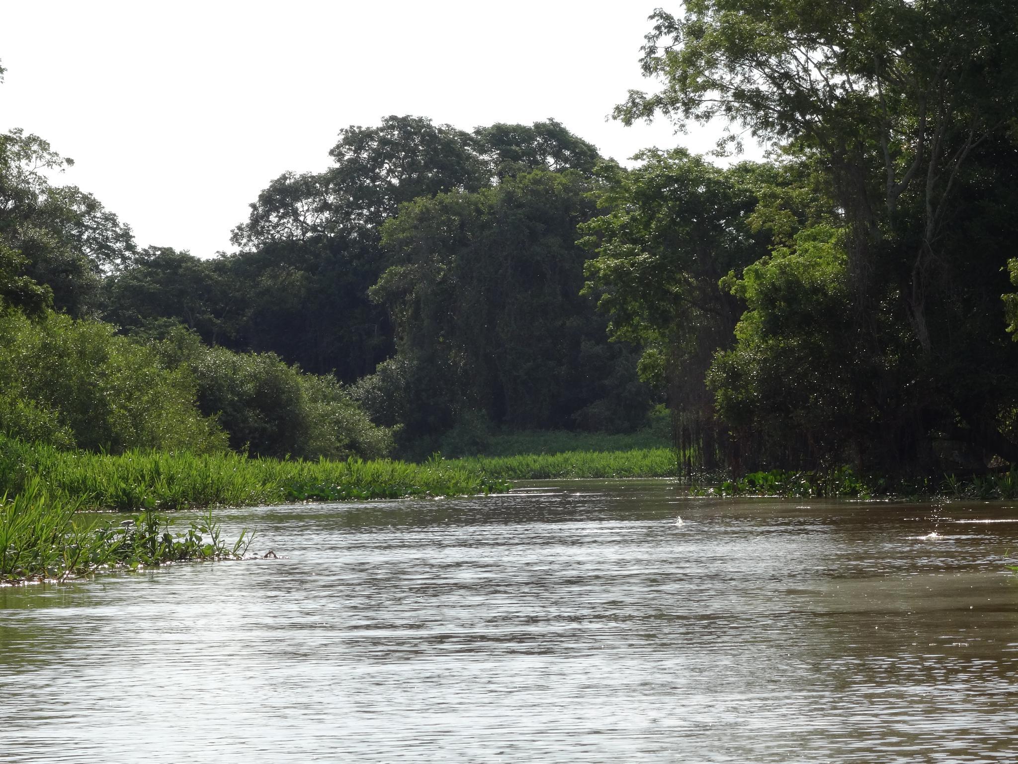 Der Rio São Lourenço