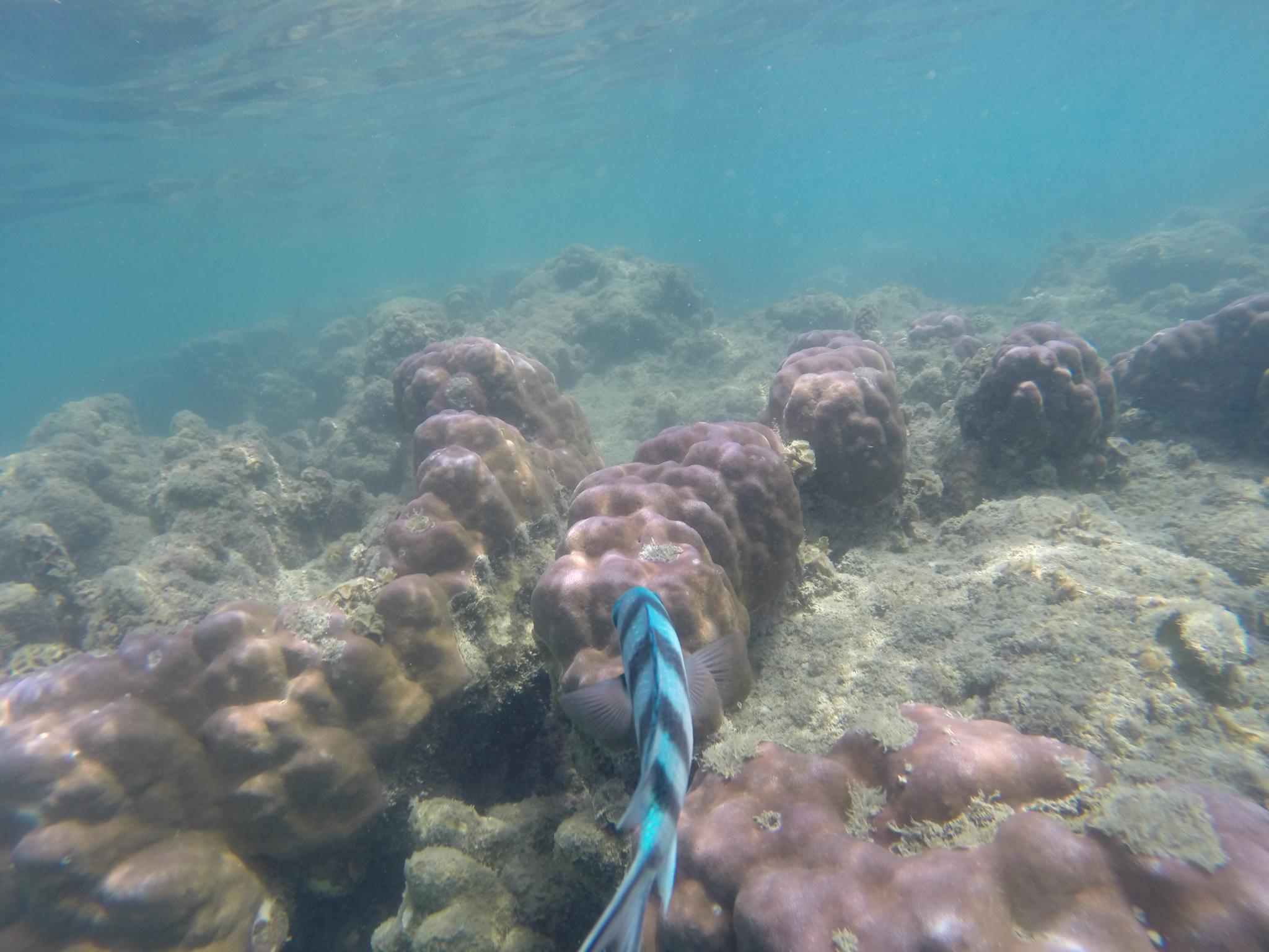 Korallen und Fische in greifbarer Nähe